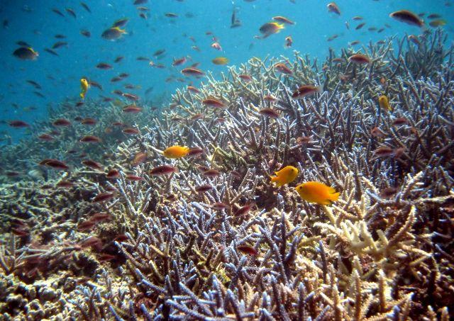 沖縄の魅力あふれる海で
